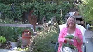 Best Herbs for Hair Care in Joans Garden Thumbnail