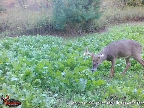 Big Wisconsin 9pt Bow Hunt