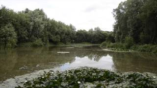 COMBE LAKE COMBE, LANGPORT, SOMERSET