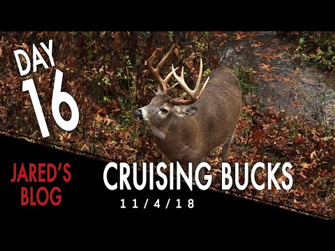 Jared Day 16: Rainy Day Cruising Bucks