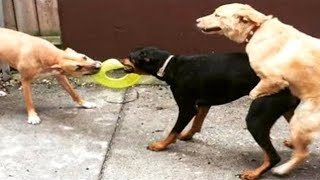🤣 Cute And Funny Animal Videos 😇 - Funniest 😻 Cats And 🐶 Dogs