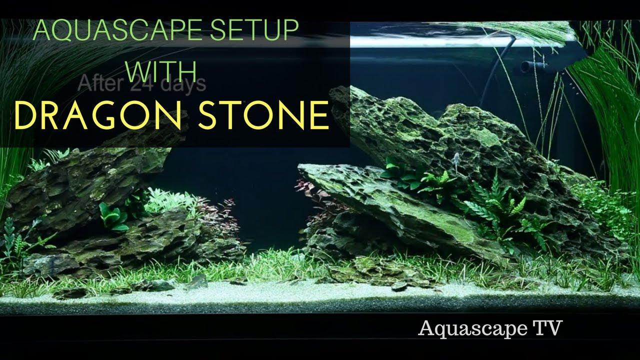 Aquascape Ideas Setting Aquascape Natural