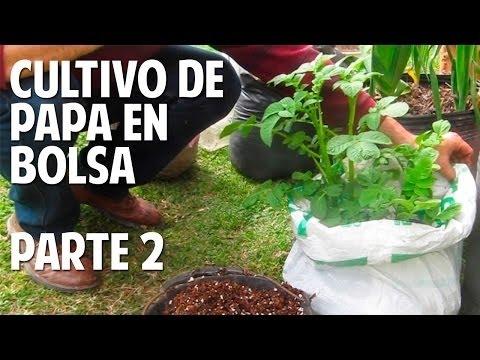 Cómo plantar papa en bolsa - Guia de cultivo y consejos - 2