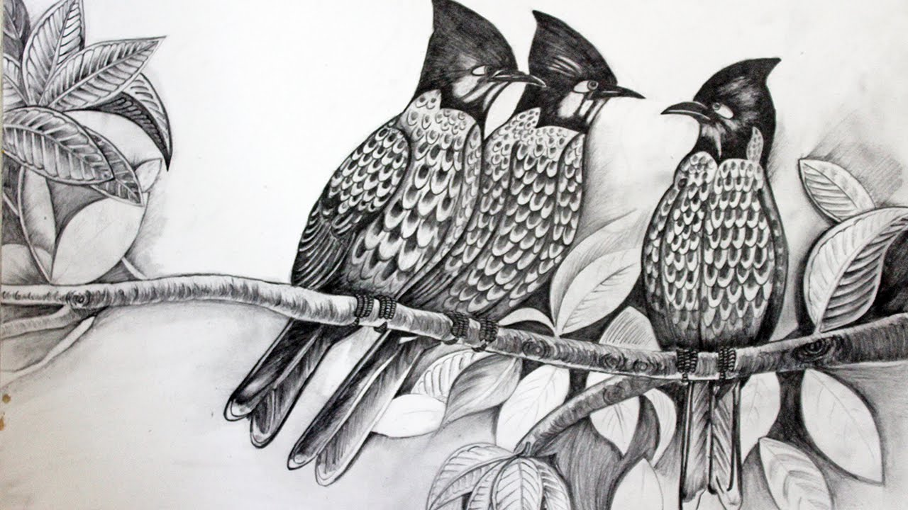 Draw birds sketch with pencil full video hindi explaination youtube