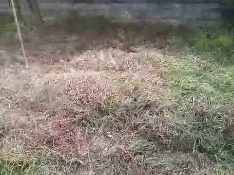 Посадка картошки под сено