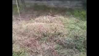 Посадка картошки под сено(07.06.2014г. посадка картофеля под сено окончание эксперимента: https://www.youtube.com/watch?v=izChuIYIQjc., 2014-06-08T09:21:20.000Z)