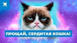 Прощай, Сердитая кошка!