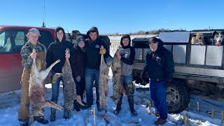 Nebraska Coyote Hunt With Greyhounds  (Awesome Hunt)