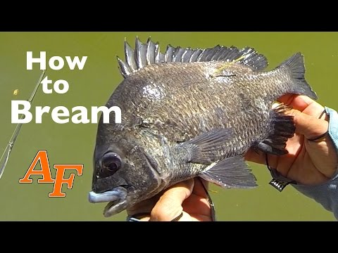 How To Catch Bream Andysfishing Andy's Fish Fishing Video EP.267