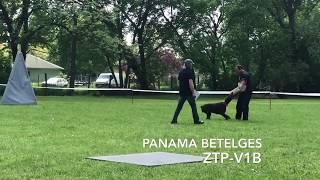 Panama Betelges  ZTP V1B