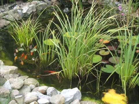 Gartenteich und goldfische youtube for Goldfische gartenteich