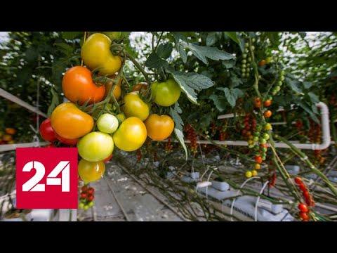Минсельхоз подведет итоги работы аграрного сектора - Россия 24 
