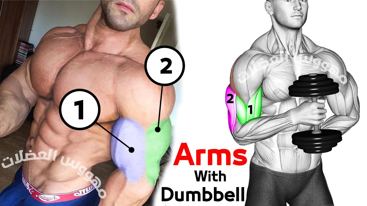 Arms workout With Dumbbell | Big Arms Workout | 8 min