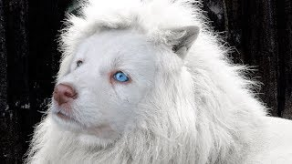CUTEST Mixed Dog Breeds In The World!