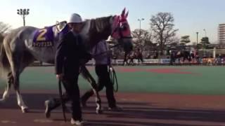 2013・3/6(水)東京スプリング盃パドック映像