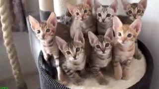 Смешные котята. приколы с кошками