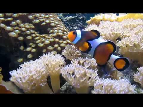 Aquatic, Marine & Freshwater Ecosystems