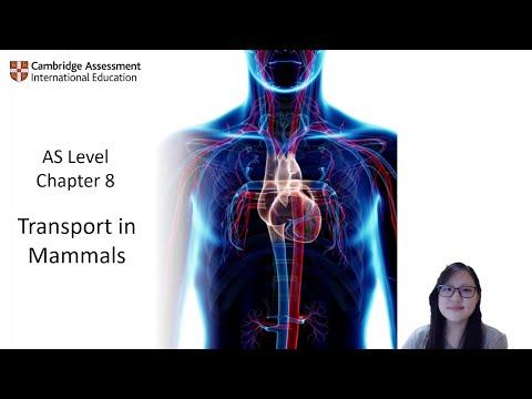 Chapter 8.1a - Blood Vessels    Cambridge A-Level 9700 Biology