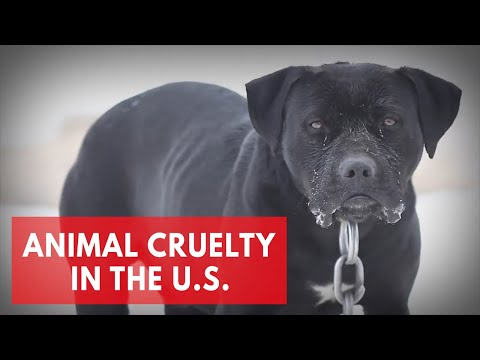 Animal cruelty in the U.S. - Best and worst states for animal protection laws