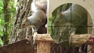 Pest Control With Air Rifles - Squirrel Shooting - Family Record (part 2)