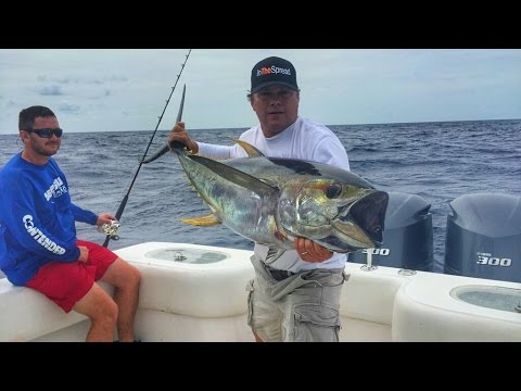 Yellowfin Tuna Fishing And Live Chumming Tactics In The Spread