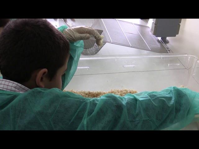 Um dia com a Medicina Tropical | IHMT NOVA