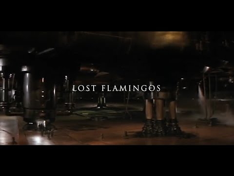 lost-flamingos---teaser