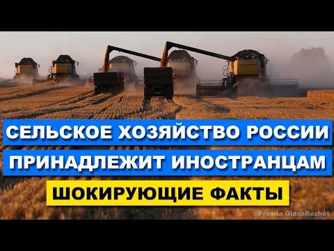 Сельским хозяйством России владеют иностранцы хозяева Российской пшеницы | Pravda GlazaRezhet
