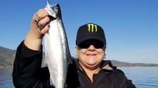 Kokanee Fishing at Lake Berryessa