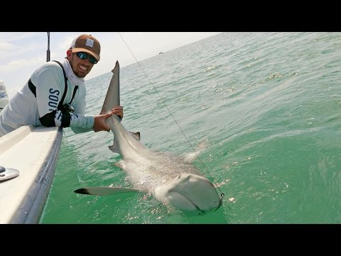 Fishing the Blacktip Shark Migration - ft. Chew On This - 4K