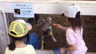 アースドリーム農場へ行ってきました!Earth Dream Farm in Hokkaido