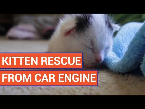 Kittens Found in Car Engine Emotional Video 2016 | Daily Heart Beat