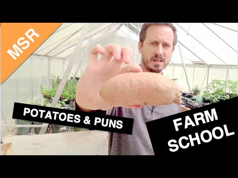 The Montessori School of Raleigh Urban Farm Update - Plants and Puns (and Dad jokes too!)