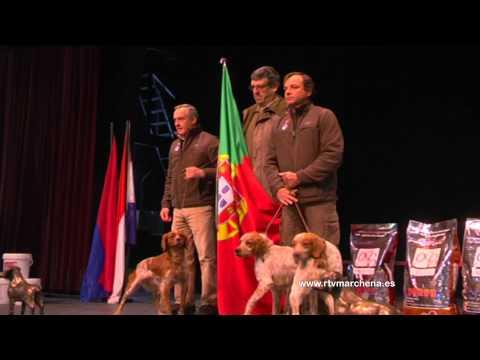 marchena-sede-del-campeonato-internacional-des-clubs-de-l´epagneul-breton