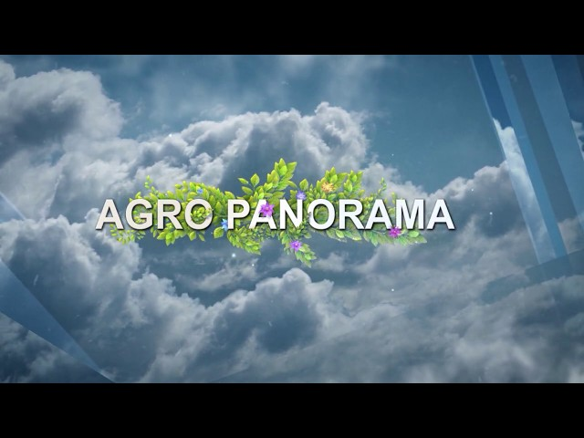 AGRO PANORAMA ZDK 3