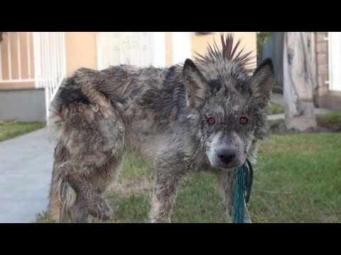 10 Most Unique Hybrid Animals That Actually Exist!