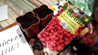 Как посадить ягоды Годжи из семян - ошибки при посадке ягод семенами