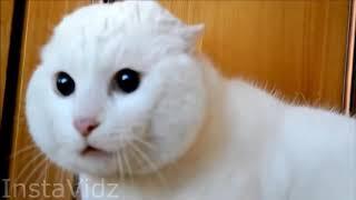 ЛУЧШИЕ ПРИКОЛЫ С КОТАМИ!!! ДО СЛЕЗ! РЖАКА 2019  FUNNY CATS