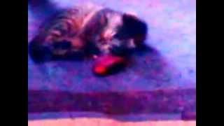 котёнок и телефон