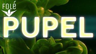 Baba Li ft. Denada - Pupel (Official Video)   Prod. MB Music