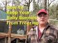 How To Keep Baby Bunnies From Freezing