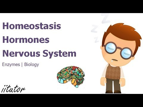 √ Homeostasis, hormones and the nervous system | iitutor