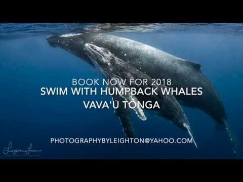 Photography Tour - Swimming with Whales Tonga