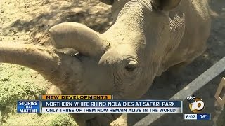 Nola dies at San Diego Zoo Safari Park