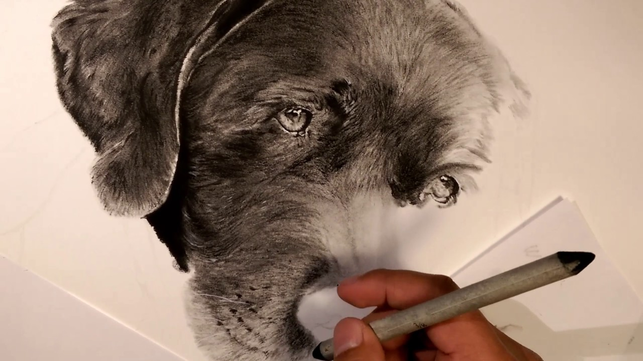 How To Draw Fur With Charcoal Pencils