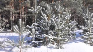 катание на снегоходе(Небольшая зарисовка о пробеге Чебоксары Сызрань на снегоходах!, 2014-02-28T14:47:54.000Z)