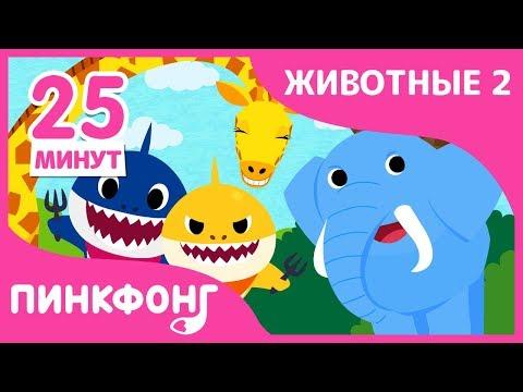 Гепард и другие песни | Песни про Животных | +Сборники | Пинкфонг Песни для Детей