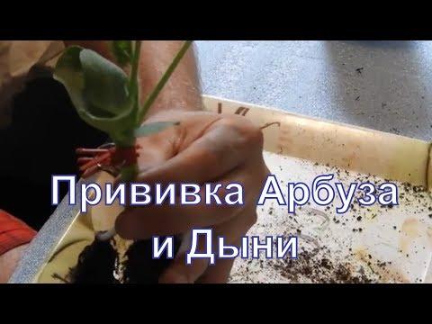 РоялСидс - магазин семян: Престиж, Сибирский Сад