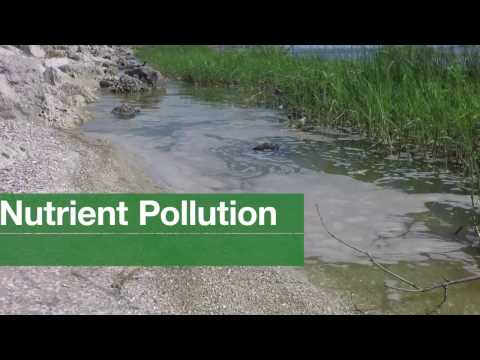 You Can Prevent Nutrient Pollution