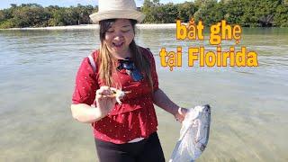 ✔326-đi vớt Ghệ xanh tại Sarasota Florida